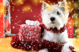 stock photo of christmas puppy  - Cute white puppy with present and snowflakes - JPG