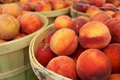 Bushel Baskets of Fresh Peaches