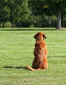 foto of spayed  - a cute dog sitting in the grass at a park during summer - JPG