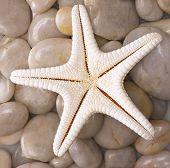 Star Fish 2