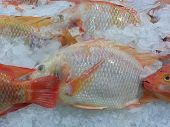 Variety Of Fresh Fish Seafood