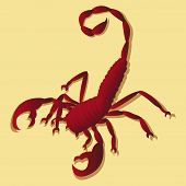 Tattoo in scorpion