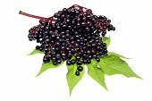 stock photo of elderberry  - Healthy elderberry fruit on a white background - JPG