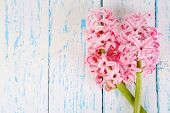 Pink hyacinth on wooden background
