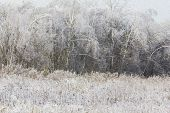 Oil Painting Stylized Photo Of Generic Winter Landscape - Frozen Meadow And Forest