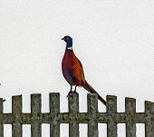 Oil Painting Stylized Photo Of Pheasant Standing On Stone Fence