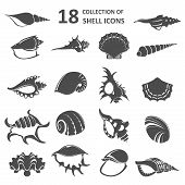 picture of scallop-shell  - Vector image of collection of shell icons - JPG