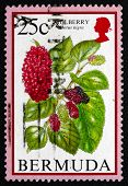Postage Stamp Bermuda 1994 Mulberry, Morus, Flowering Fruits