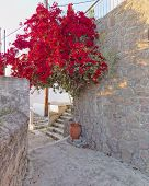 red bougainvillea in mediterranean village street