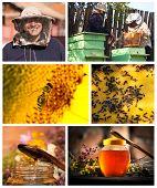 Collage Honey