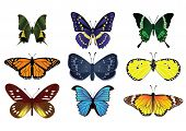 24Butterfly