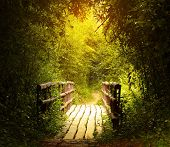 Wooden bridge in the green tropical forest