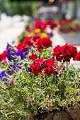 Red And Purple Flowers In Planter