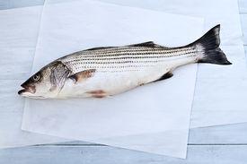 stock photo of striper  - Freshly caught striped bass being prepared for dinner - JPG