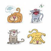 Постер, плакат: Cats collection