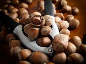 Hazelnuts And Tool