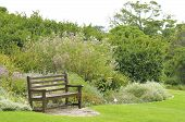 picture of fynbos  - Bench in the Kirstenbosch National Botanical Gardens in Cape Town - JPG