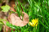 spring grass and flower