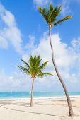 Two Palm Trees On Empty Beach With White Sand