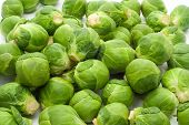 Brussels Sprouts Cabbage