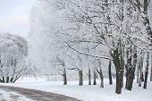 Alley In Park In Winter