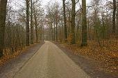Road in a beech forest in winter