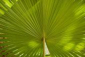 Palm Leaf Blur.