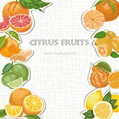 Vector Background With Citrus Fruits