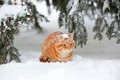 Beautiful red cat under fir tree on white snow background