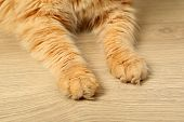 image of paws  - Paws of red cat on wooden floor background - JPG