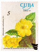Stamp printed by Cuba shows Allamanda flowers Allamanda cathart