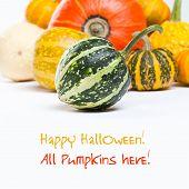 Colorful pumpkins. Halloween