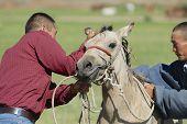 Men put bridle on foal, circa Harhorin, Mongolia.