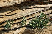 Plant of succulent in the crack of rock