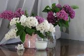stock photo of jug  - Lilac bouquet in a transparent jug and a cup with milk  - JPG