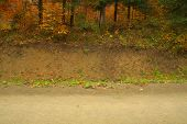 foto of tree lined street  - Road side view concept grass and plants trees - JPG