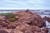 picture of mile  - 17 Mile drive is a scenic road - JPG