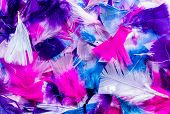 picture of mixture  - Mixture of colorful cut feathers pinks blue and purples - JPG