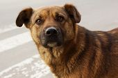 stock photo of loveless  - Lonely homeless dog look in camera outdoors - JPG