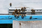 stock photo of honey bee hive  - bee hive with bees on it for your design - JPG