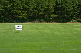image of fescue  - A new field of grass with a field closed sign on it - JPG