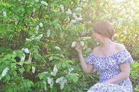 picture of denude  - An adult woman near blossoming bird cherry in the park - JPG