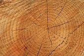 Anéis de árvore
