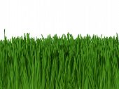 Background Of Green Grass Against Blue Sky (Macro Focus) 300Dpi