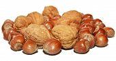 Blend Walnuts And Hazelnuts
