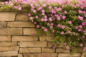 Purple Flowers On Rock Wall