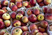 Cartons of MacIntosh Apples