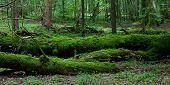 Постер, плакат: Мертвый сломанные деревья Мосс завернутые