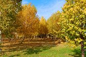 Autumn Scene Horizontal