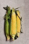 Still Life With Three Indian Corn